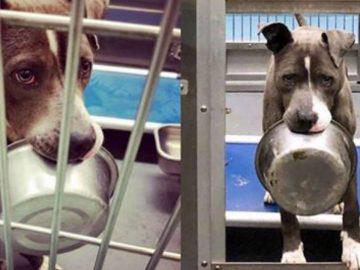 Cachorro abandonado em abrigo se recusa a ser adotado sem sua tigela de comida