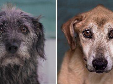 Fotógrafa tira fotos de cães de rua idosos para incentivar adoção tardia
