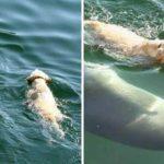 Cão se joga no mar todos os dias para encontrar e nadar com golfinho