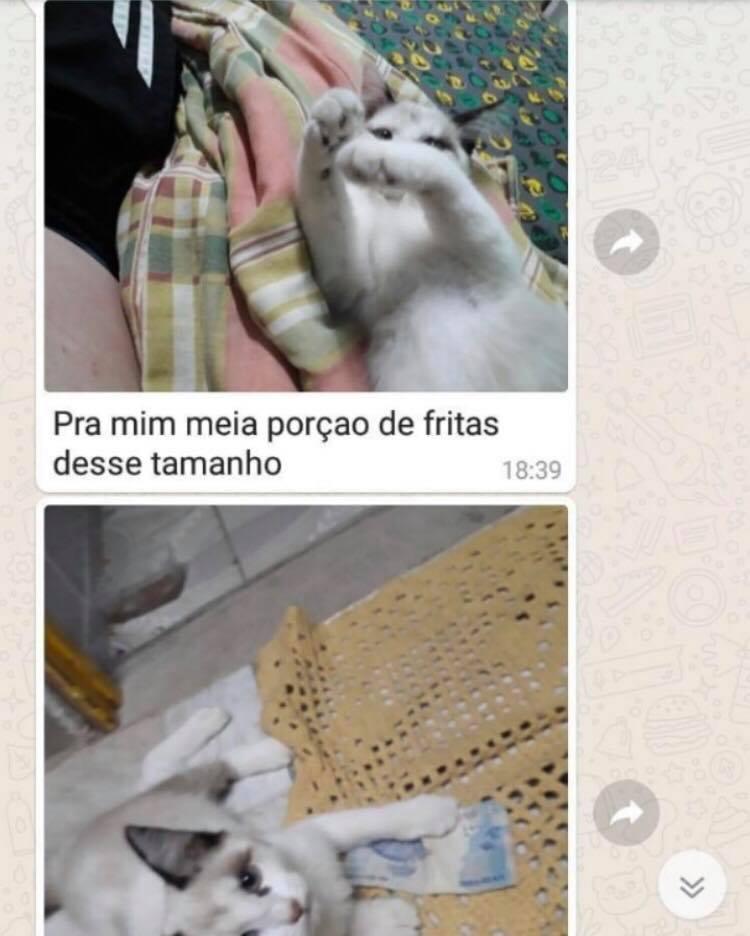 Cliente usa gatinho fazer pedido forma inusitada funcionária embarca brincadeira: história viralizou!
