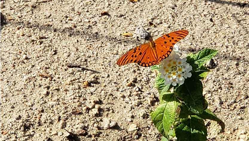 advogado cria canteiro atrair borboletas