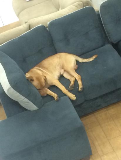 funcionário casas bahia adota cachorro visitava loja