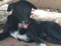 Cão com deficiência vira herói após salvar bebê enterrado vivo na Tailândia