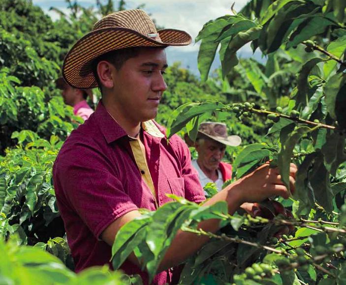 produtores de café nespresso cápsulas