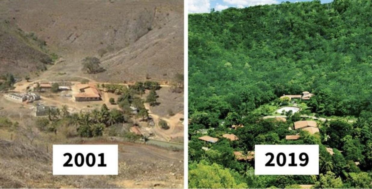 Casal planta 2 milhões de árvores em área devastada para dar lar a 500 espécies ameaçadas