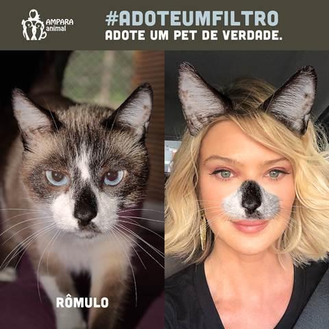 ONG lança filtro de Instagram com animais reais e disponíveis para adoção