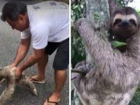 """Homem resgata preguiça de rodovia movimentada e animal """"agradece"""" - veja vídeo"""
