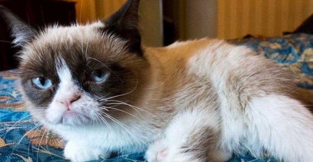 Morre Grumpy Cat, a gata mais 'rabugenta' da internet
