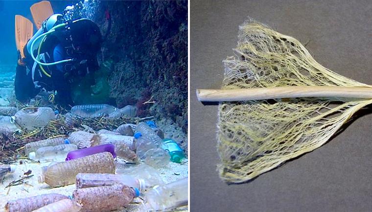 Bioplásticos feitos de cânhamo são alternativa viável aos plásticos à base de petróleo 5