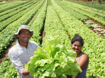 ONU oferece curso online GRATUITO sobre agricultura familiar responsável (inspirado em metodologia brasileira) 1