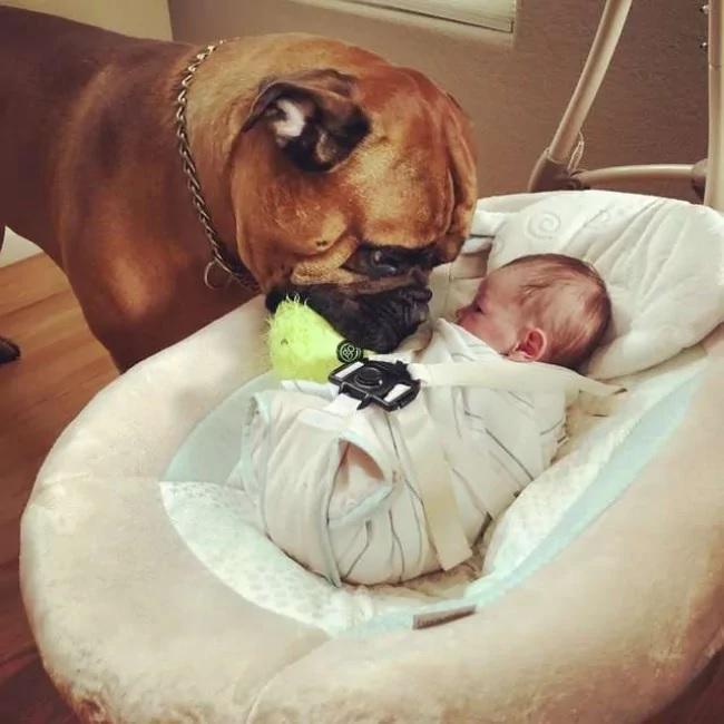 cachorro empresta brinquedo irmão parar chorar