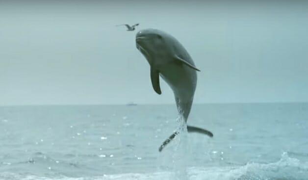 Golfinho sai da água e tasca um selinho em cachorro - veja o vídeo 1