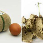 Conheça o Biopack, embalagem de ovos que pode ser plantada após uso