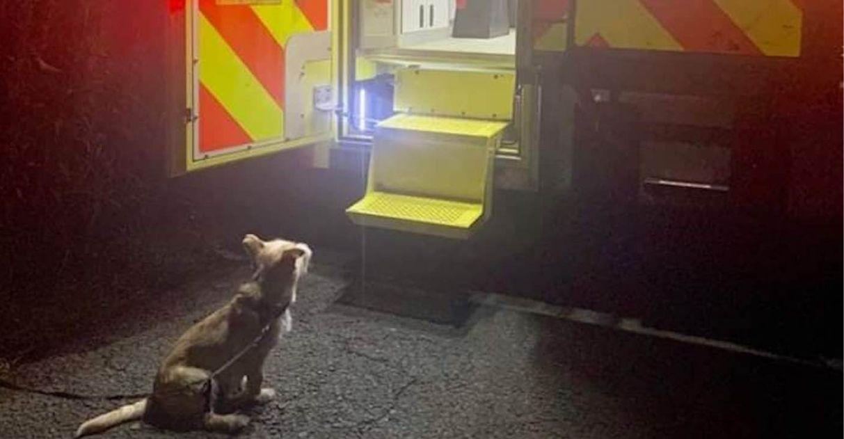 A internet está se derretendo pela foto de um cãozinho aguardando o atendimento de seu dono