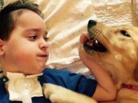 Cãozinho transforma vida de garoto com paralisia que não conseguia mais sorrir