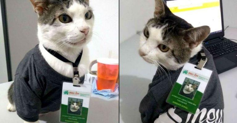 """Ex-gatinho de rua ganha crachá, uniforme e vira """"gerente"""" de empresa de enxovais"""