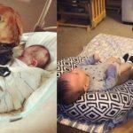 cachorro 'empresta' brinquedo favorito para seu irmão parar de chorar