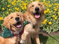 Escola adota cães treinados (e fofinhos) para combater ansiedade entre alunos