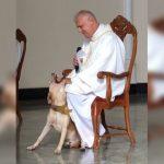 Cachorro invade missa e reação do padre causa comoção na internet