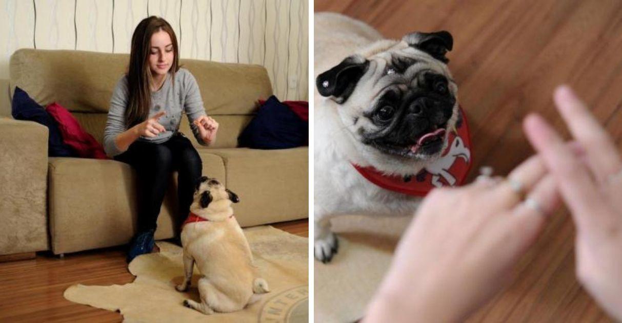 Cachorrinha aprende comandos em Libras para entender seus donos em Caxias do Sul (RS)