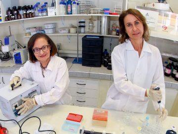 Pesquisadoras da Unicamp desenvolvem colírio que evita e trata a perda de visão em diabéticos