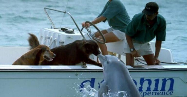 Golfinho sai da água para dar um selinho em cachorro