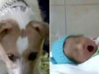 Cachorro leva o dono para matagal onde encontram bebê abandonada