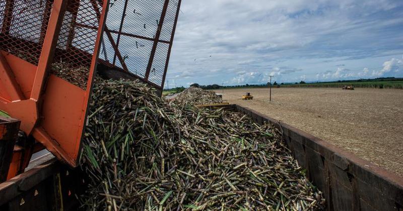 USP produz plástico 100% biodegradável com resíduos da agroindústria