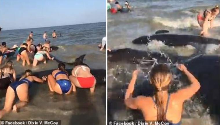 Banhistas salvam baleias encalhadas em praia e ajudam elas a retornarem à água