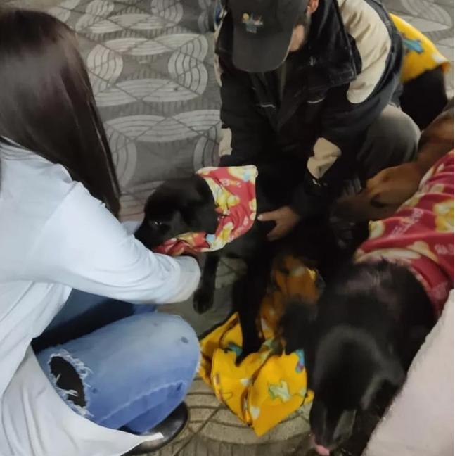 costureira roupinhas cães homem situação rua