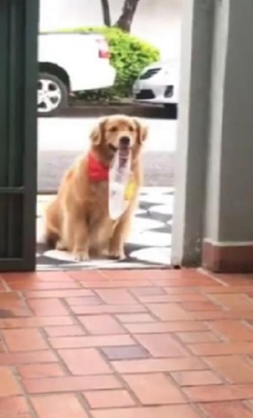 cachorrinha padaria buscar pão dona