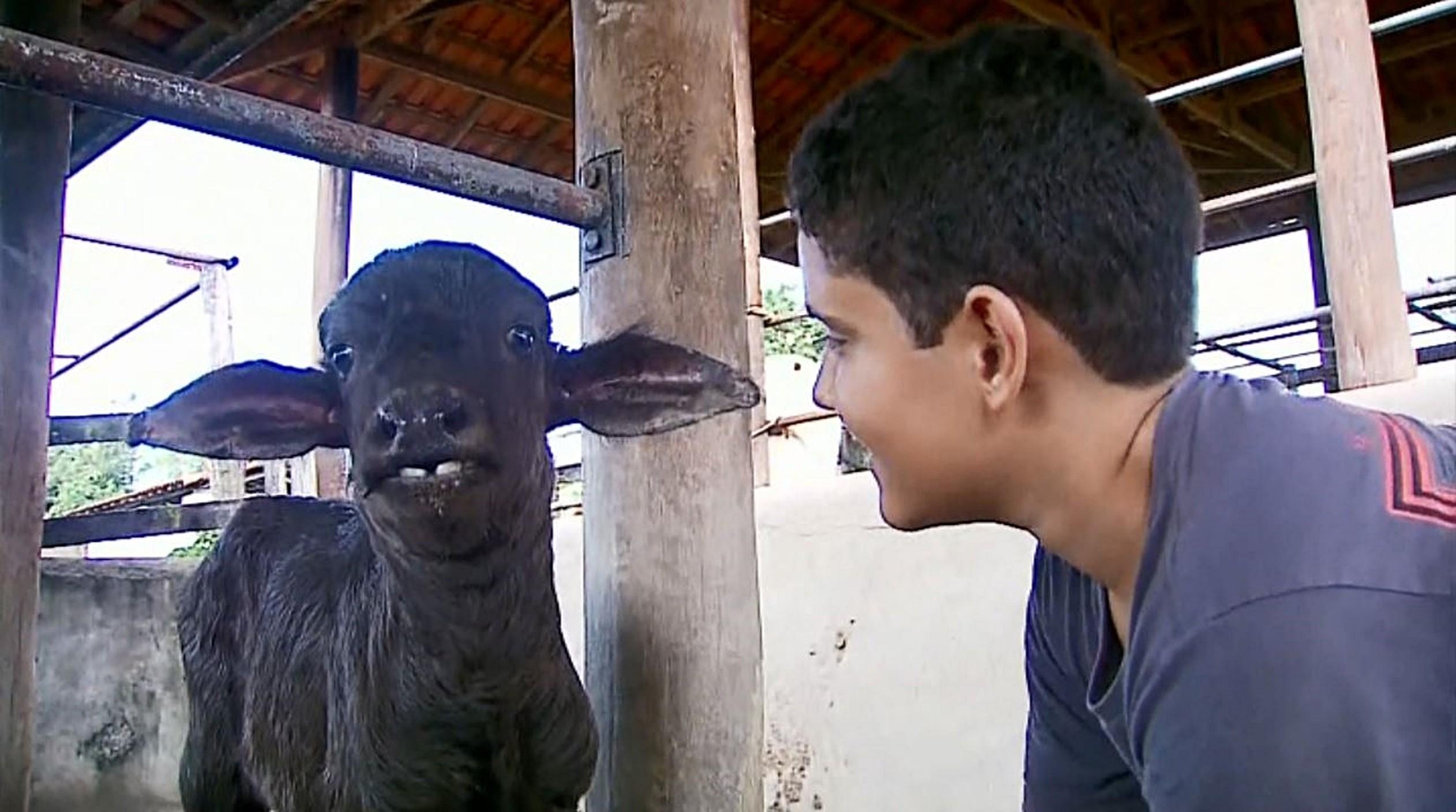 """""""Posso dar carinho a ela"""", diz menino de 13 anos que adotou filhote de búfala"""