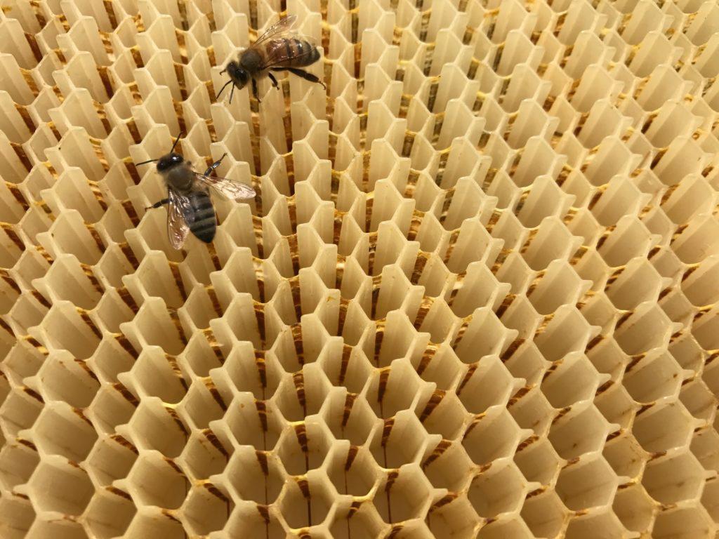 Pai e filho ajudam a criar 51 mil novas colônias de colmeias
