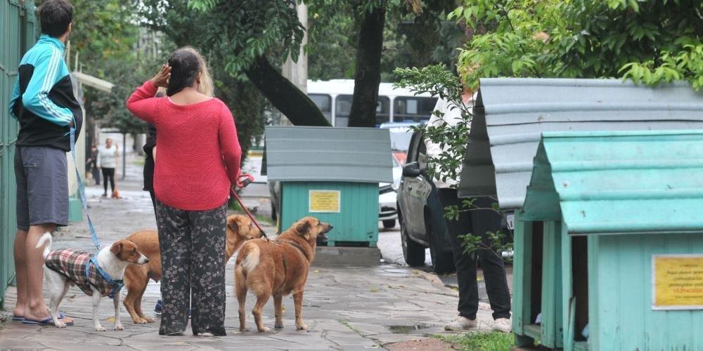juiz suspende remoção casinhas cães porto alegre