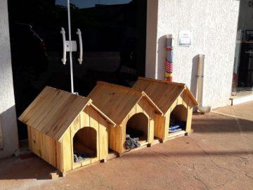 Professora cria 'cãodomínio' para abrigar cães de rua em Buri (SP)