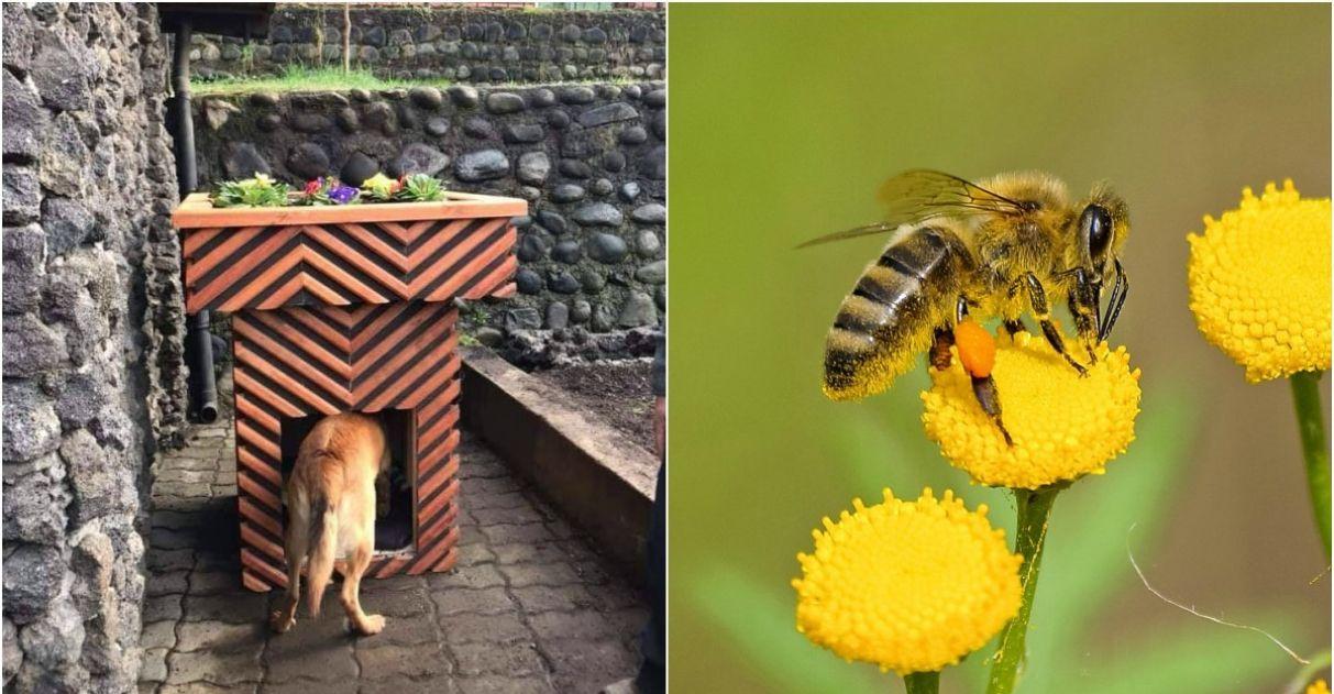 Cidade chilena constrói casinhas para cães de rua com descanso para abelhas