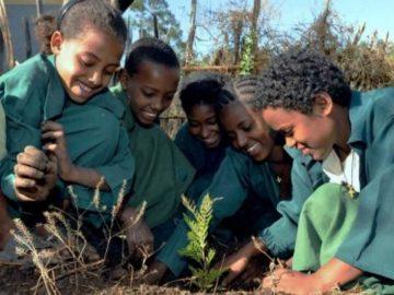Etiópia quebra recorde mundial ao plantar 350 milhões de mudas de árvores em apenas um dia