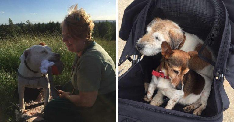 Enfermeira aposentada dedica vida a resgatar e cuidar de cães abandonados