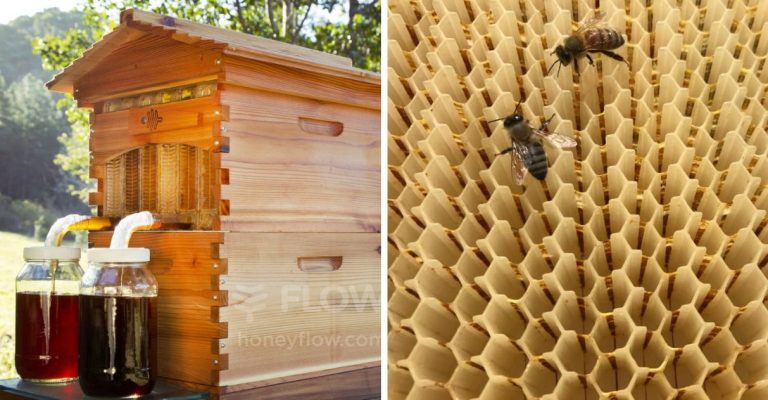 Father and son create 51,000 hive colonies to save bees from extinction
