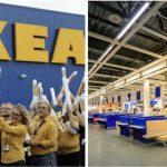 IKEA planeja dar centenas de empregos a refugiados no Canadá