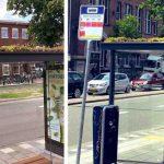 Paradas de ônibus ganham telhado verde para abelhas e humanos