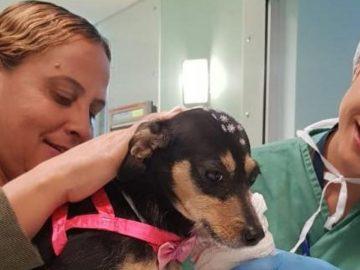 Idosa internada na UTI apresenta melhora após encontrar sua cadelinha