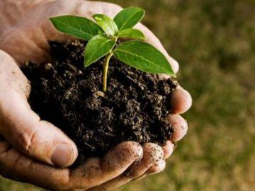 turquia feriado dedicado plantio árvores