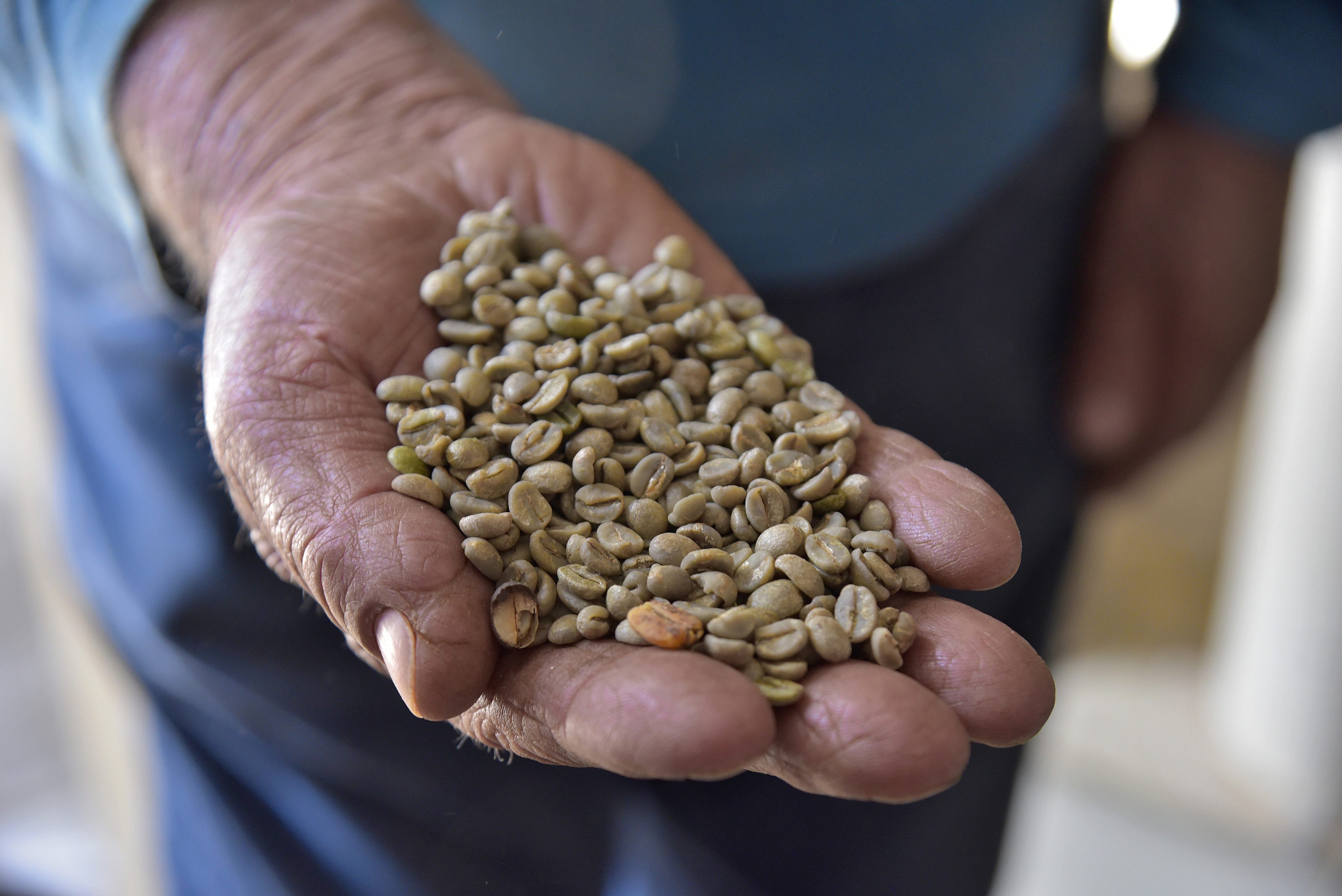 conheca antonio terceira geracao familia vive cafe mg vida
