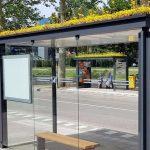telhado verde parada ônibus paraíso abelhas