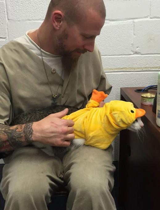 Prisão nos EUA aceita gatos de abrigo e transforma vidas de prisioneiros
