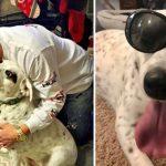 """Cachorra abandonada por ser """"carinhosa demais"""" é adotada por família tão amorosa quanto ela 10"""