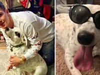 """Cachorra abandonada por ser """"carinhosa demais"""" é adotada por família tão amorosa quanto ela 2"""