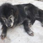 Família reencontra cachorro 10 anos após o seu sumiço em Curitiba (PR) 1