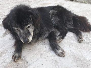 Família reencontra cachorro 10 anos após o seu sumiço em Curitiba (PR) 5